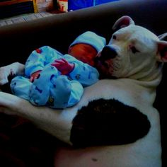 Our American bulldog Lola holding our 2 day old baby boy Keegan!! Gentle Giant!!