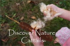 Simple and Joyful: Discover Nature: Cattails
