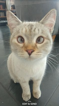 My kitty goes cross eyed when people get too close... http://ift.tt/2noMqrw