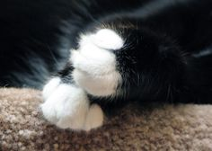 #Kitty #cat #paws