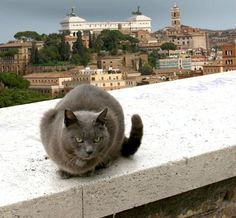 "Feral Cats of Rome ~ ""I'm not feral; I'm docile....harrumph."""