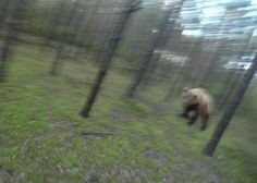 Watch This Man Trying To Run Away From An Attacking Bear #Pets #Animals