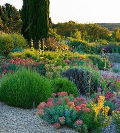 #GARDEN OF OLIVIER FILIPPI, MEZE, #FRANCE: THE GRAVEL GARDEN AT DAWN http://www.clivenichols.com/