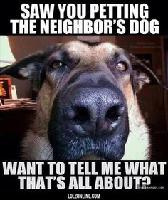 Every Time My Dogs Sees Me With Another Dog #lol