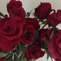 Flowers from Archie Red Like Roses, White Roses, Half Elf, Lizzie Hearts, Sweet Revenge, The Dark Artifices, Red Aesthetic, Disney Aesthetic, Aesthetic Roses