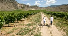 Hit the bike park, cycle through vineyards, or ride across wooden trestles - find out all the ways to explore the Thompson Okanagan by two wheels in this week's featured trip idea: http://www.hellobc.com/british-columbia/trip-idea/thompson-okanagan-biking-tours
