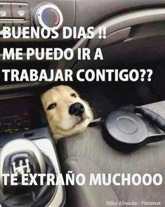 ✓✓✓ Ríe sin parar con humor grafico friki, chistes de pepito jugando, memes imagenes graciosas en español, imagenes de risa viernes y memes en español de hinata. ➡ http://www.diverint.com/humor-grafico-picaro-la-cara-que-se-te-queda-cuando-descubres-que-eres-un-gato/