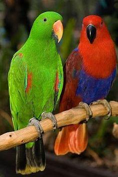Exotic Birds, Colorful Birds, Bird Barn, Barn Owls, Caran D'ache, Parrot Toys, Flamingo Bird, Budgies, Parrots