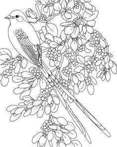 oklahoma scissor tailed flycatcher coloring page purple kitty