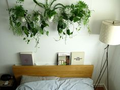 wall of plants by the bed cleaning the air for a good night sleep.