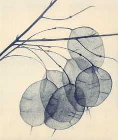 Angela Brookes ~ Honesty II (etching, 45x51cm)                                                                                                                                                                                 More