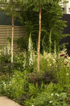 Chelsea Flower Show. Elks-Smith Garden Design Hampshire and Dorset. (skip the pole-like young trees, though) Contemporary Garden Design, Garden Landscape Design, Garden Landscaping, Chelsea Flower Show, Garden Show, Dream Garden, Back Gardens, Outdoor Gardens, Permaculture