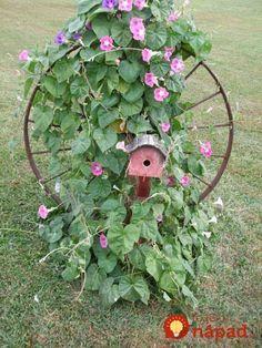 Žiadna sterilná krása a drahý záhradný architekt: Títo ľudia si záhrady vylepšili úplne sami – krajšie nápady sme ešte nevideli!