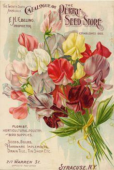 Shop Vintage Seed Catalog, Sweet Pea Flowers Poster created by yesterdaysgirl. Vintage Diy, Images Vintage, Vintage Labels, Vintage Ephemera, Vintage Cards, Vintage Postcards, Seed Art, Sweet Pea Flowers, Vintage Seed Packets