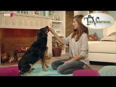 Sitz – so klappt's beim Hund   Tierversteher TV   WDR - YouTube