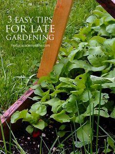 3 Easy Tips for LATE #Gardening