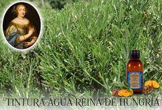 Agua de la Reina de Hungría, y sientete como una reina. http://wp.me/p3EEwy-hx Uno de los productos mas demandados en la cosmética natural, compralo en eartesano.com