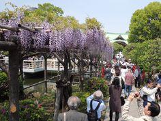 kameido tenjin tokiyo japan 2015.04.25