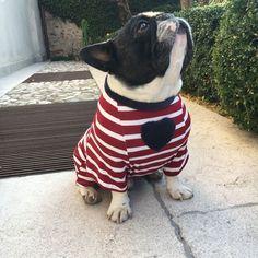 French Bulldog in a True Love tee shirt
