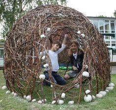 willow pod
