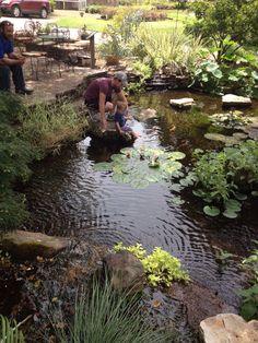 Everyone Loves a Water Garden.