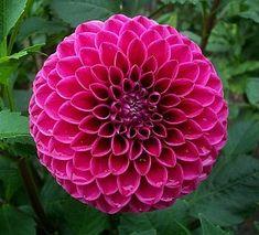 Mary's Jomanda: Ball, Dark Pink