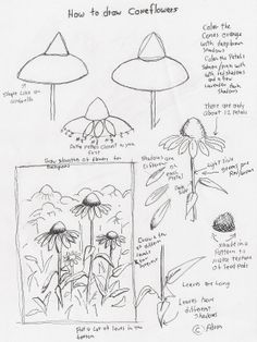 coneflower art lesson - Google Search