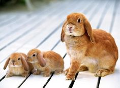 Mommy and her baby bunnies