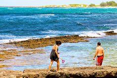 Tide Pools by Turtle Bay SEIS, via Flickr Turtle Bay Resort, North Shore Oahu, Tide Pools, Beach, The Beach, Beaches