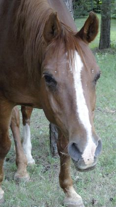 Horses, Animales, Horse