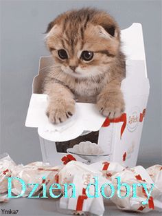 Animated Cute Kitty In Gif Box Mobile Phone Wallpapers Hd Wallpapers For Your Cell Phone Baby Kittens, Kittens Cutest, Cats And Kittens, Baby Animals, Funny Animals, Cute Animals, Pretty Cats, Beautiful Cats, I Love Cats