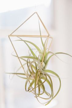 DIY Air Plant Cages with a step-by-step diagram and video tutorial. These little pieces of geometric heaven are the perfect delicate accent to add to your home decor.