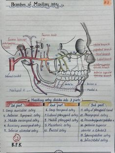 Necessary Dental Hygienist Study Dental Assistant Study, Dental Hygiene Student, Oral Hygiene, Dental Hygienist, Dental Anatomy, Medical Anatomy, Gross Anatomy, Dental Surgery, Dental Implants
