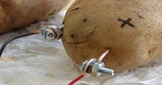 You Can Light Your Room For A Whole Month With Potato (VIDEO)