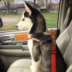 FREE World Wide Shipping! The Paw Prime dog seat belt's is a pet restraint device designed to help protect you and your pet while traveling in an automobile. Seat Belt Clip, Dog Seat Belt, Seat Belts, Pet Dogs, Dog Cat, Doggies, Dog Safety, Dog Travel, Dog Bowtie