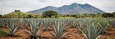 Te presentamos las actividades que no puedes dejar de realizar durante tu próxima visita a este increíble Pueblo Mágico donde elegantes agaves dan vida a la bebida más famosa de México.
