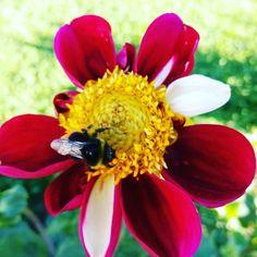 Working hard. / Trabajando duro. #flowers #flores #nature #naturaleza #bug #bicho