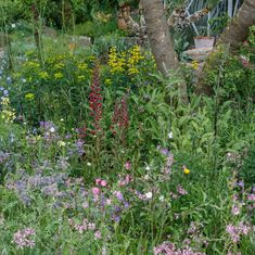 The Resilience Garden designed by Sarah Eberle and built by Crocus Welcome To Yorkshire, Uk Digital, Pallets Garden, Chelsea Flower Show, Home Trends, Big Houses, Growing Plants, Beautiful Homes, Garden Design