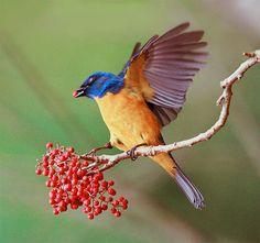 Wonderful flickr pic site BIRDS