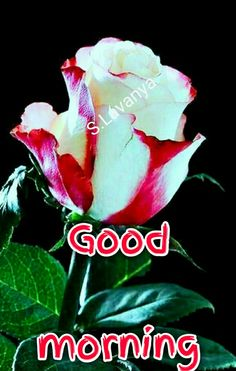New good morning இனிய காலை வணக்கம் புன்னகை காலை வணக்கம் நட்புடன் காலை வணக்கம் S. Good Morning Wishes Gif, Good Morning Romantic, Good Morning Images, Mornings, Israel, Buen Dia, Messages, Words, Gud Morning Images