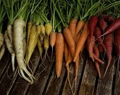 I didn't plant my carrots this year. Shame on me...oh wait, I can still do it!