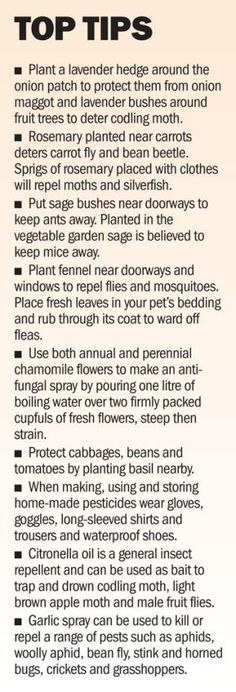 Pennie Woodward knows her bugs and her plants. A simple guide to companion planting and the uses of herbs.