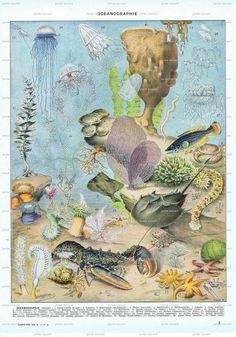 AntiqueOceanCrustaceanFrenchBook by studioflowerpower on Etsy, $12.00