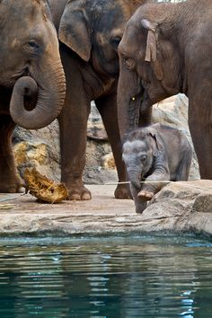 For Gracie.  Most of these pics are new to me!!  Baby Elephant
