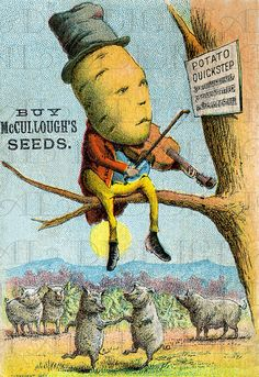 Potato Man Fiddles Up In A Tree. Weird Offbeat Antique Ad Card Illustration. Digital Vintage Download. Unusual Digital Vintage Print.