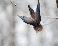 Bird Photography: The Art of Staying Aloft No.3 Mourning Dove (Zenaida macroura)