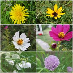 Nature Pictures, Plants, Plant, Planets