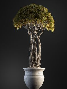 Are you interested in getting an indoor bonsai tree? If you are, then you definitely need to learn about how you can take good care of your tree so that it will survive life indoors. Bonsai Tree Price, Buy Bonsai Tree, Japanese Bonsai Tree, Bonsai Trees For Sale, Bonsai Tree Care, Bonsai Tree Types, Indoor Bonsai Tree, Bonsai Plants, Bonsai Garden
