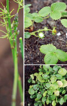 Start an easy vegetable garden.