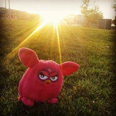 De paseo con el nuevo miembro de la familia #Furby #peluches #pelucheando
